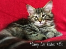 Honey Les Fades *ES_1