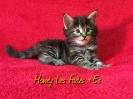 Honey Les Fades *ES_3