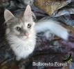 Orbea_33