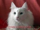 Orbea_39